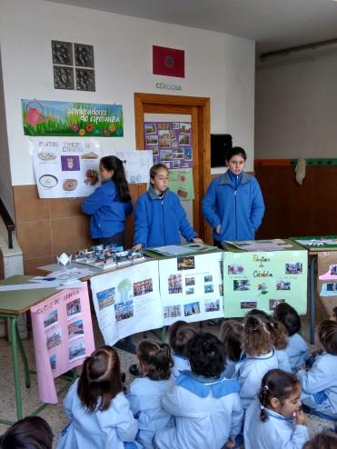 Día de Andalucía 09